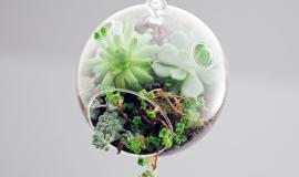 Dizajnerskie terraria dla owadów